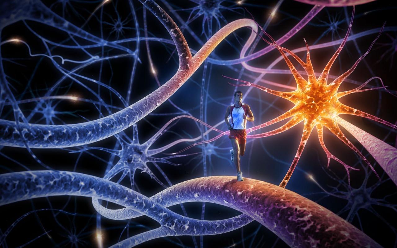Влияние бега трусцой на нервную систему