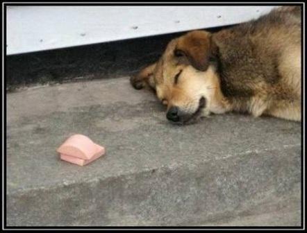 Собака не есть докторскую колбасу
