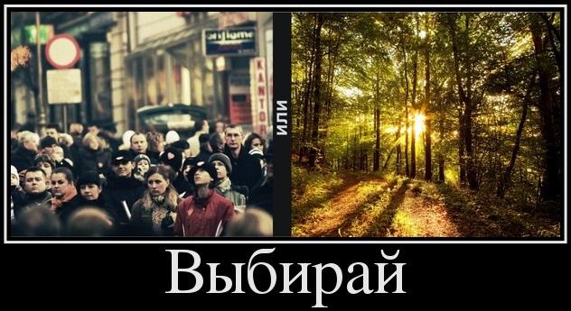 Город или лес