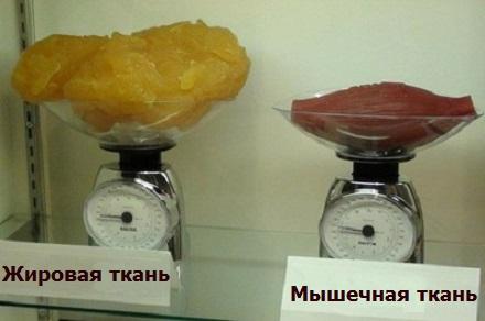 Как выглядят 2,5 кг жира и 2,5 кг мышц (стравнение).